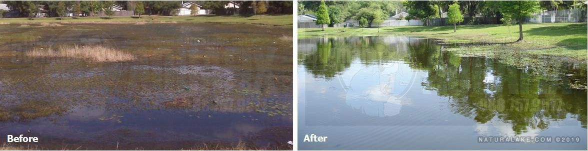 Clarify water and degrade pond muck and sludge in lakes and ponds