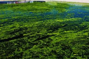 pond rx aquafix pond and lake management solutions
