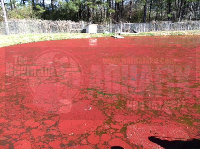 Euglena Red Algae