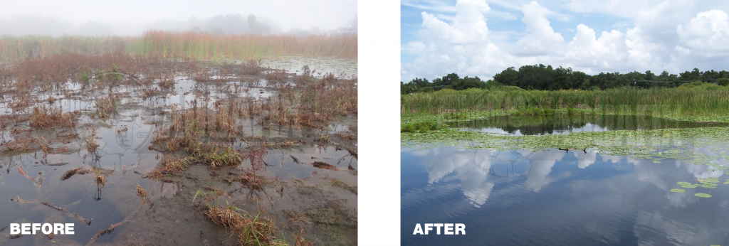 Tussock before and after