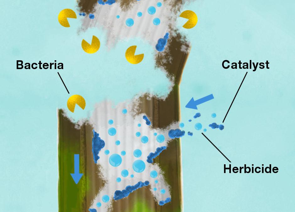 Probiotics vs Biocatalysts