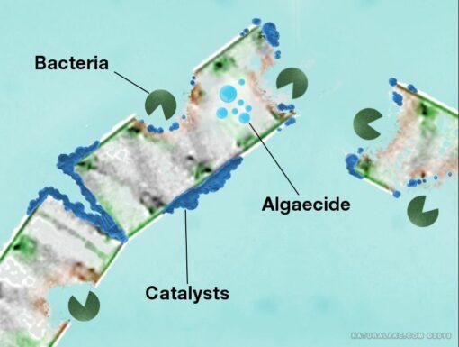 pondzilla-diagram
