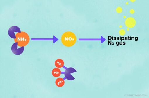 vs-blends-diagram