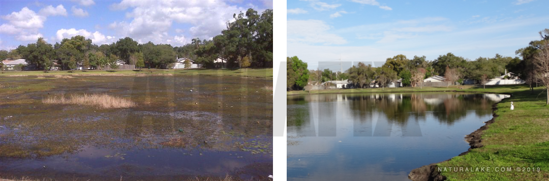 aquatic weeds before and after