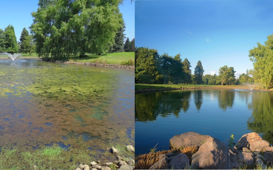PondZilla Pro Scores Hole in One at Hydrilla-Infested Portland Golf Course Pond