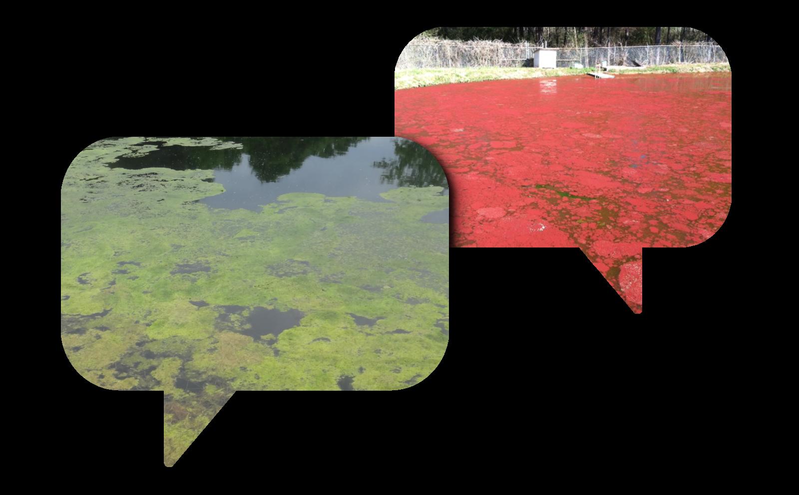 Algae-solutions