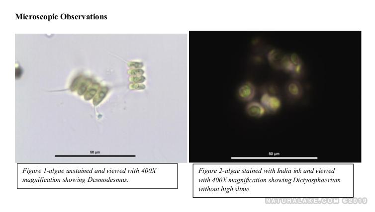 Gold Testing on Algae that Raise pH