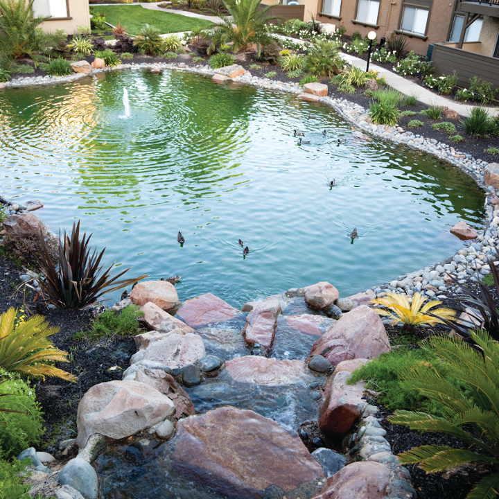 Top 28 decorative ponds how to make a decorative pond for Ornamental pond waterfall