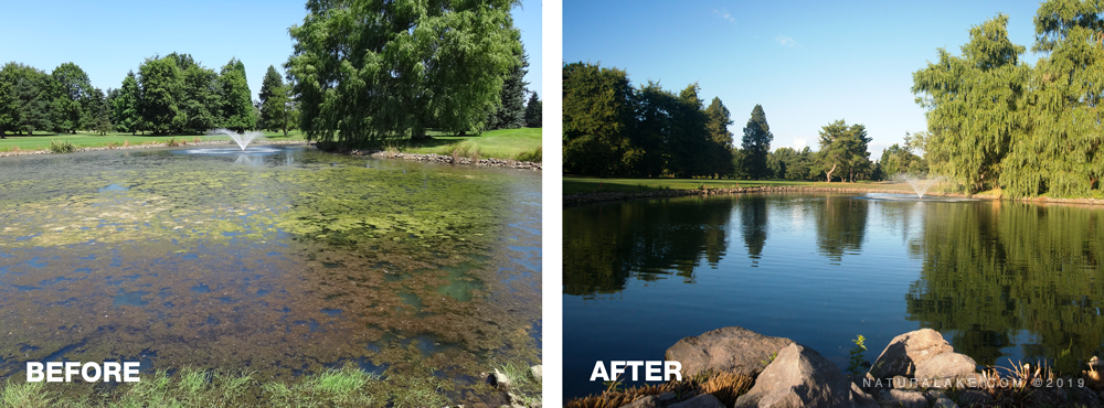 Hydrilla-and-southern-naiad-before-and-after