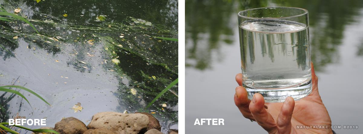 Planktonic-algae-before-after