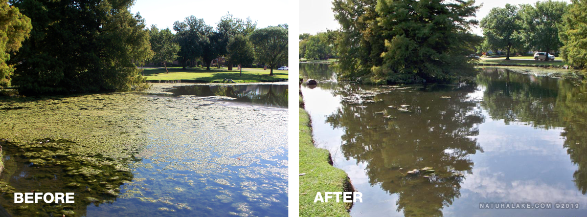 algae-before-and-after