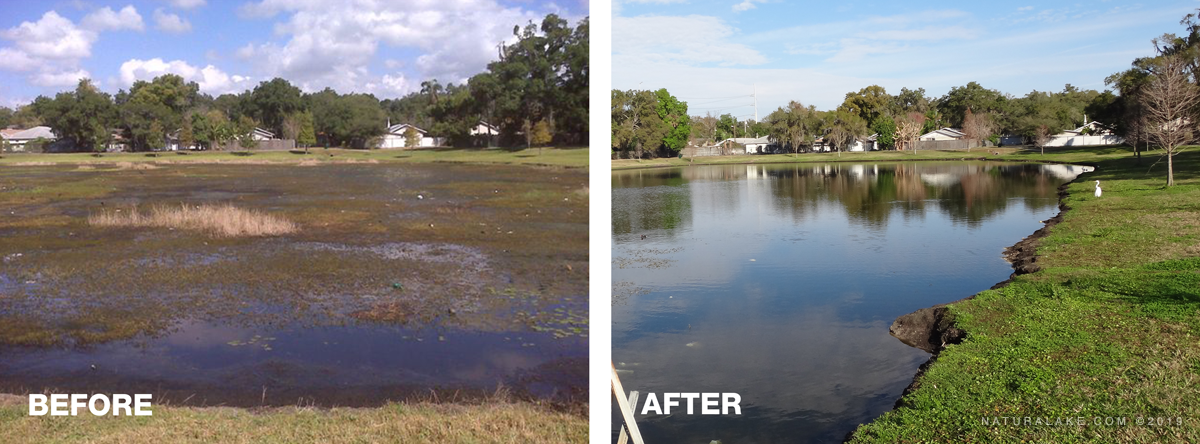 aquatic-weeds-before-after