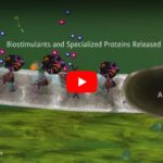 Boost Algaecide with PondZilla Pro – Video
